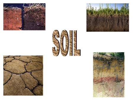 Soil provides… nutrients for plant growth. Soil comes from: Rocks Minerals Decaying Organic Matter.