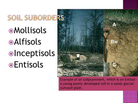  Mollisols  Alfisols  Inceptisols  Entisols Example of an Udipsamment, which is an Entisol – A young poorly developed soil in a sandy glacial outwash.