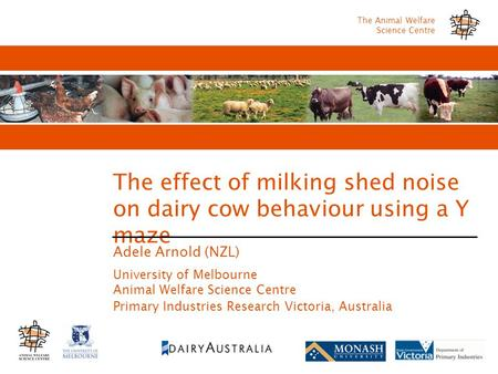 The Animal Welfare Science Centre The effect of milking shed noise on dairy cow behaviour using a Y maze Adele Arnold (NZL) University of Melbourne Animal.