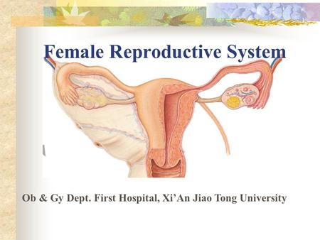 Female Reproductive System Ob & Gy Dept. First Hospital, Xi'An Jiao Tong University.