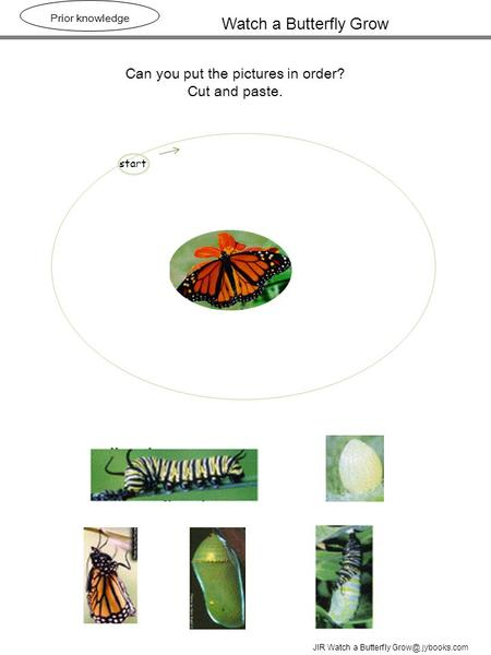 Watch a Butterfly Grow Prior knowledge Can you put the pictures in order? Cut and paste. JIR Watch a Butterfly jybooks.com start.