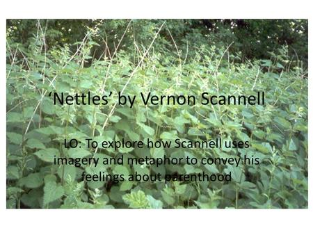 'Nettles' by Vernon Scannell LO: To explore how Scannell uses imagery and metaphor to convey his feelings about parenthood.