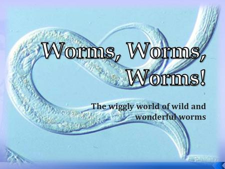 The wiggly world of wild and wonderful worms.  Kingdom: Animalia  Phylum : Platyhelminthes (Flatworms)  Class: Turbellaria (Turbellarians)  Class:
