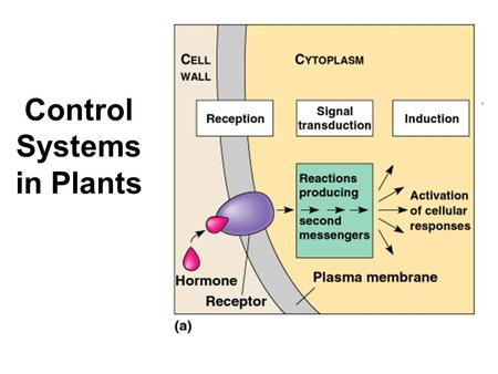Control Systems in Plants