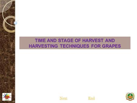 TIME AND STAGE OF HARVEST AND HARVESTING TECHNIQUES FOR GRAPES NextEnd.