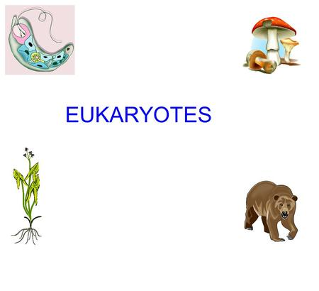 EUKARYOTES. EUKARYOTES ANTICIPATION GUIDE ( Choices for each question include protists, fungi, plants, and animals.) 1. Do not contain cell walls and.