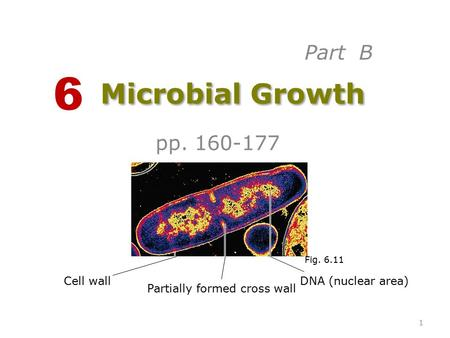 Microbial Growth pp. 160-177 6 Cell wall Partially formed cross wall DNA (nuclear area) Fig. 6.11 Part B 1.