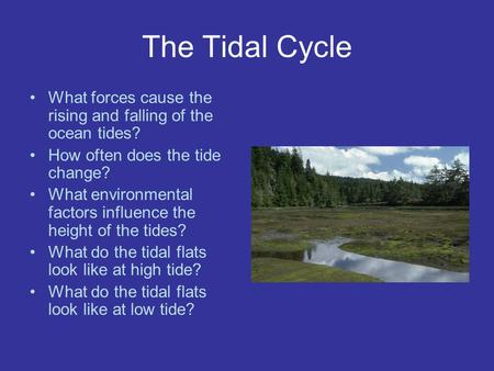 The Tidal Cycle What forces cause the rising and falling of the ocean tides? How often does the tide change? What environmental factors influence the height.