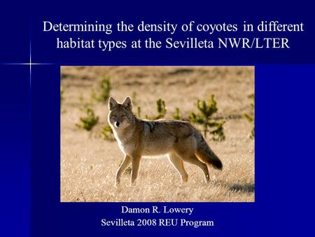 Determining the density of coyotes in different habitat types at the Sevilleta NWR/LTER Damon R. Lowery Sevilleta 2008 REU Program.