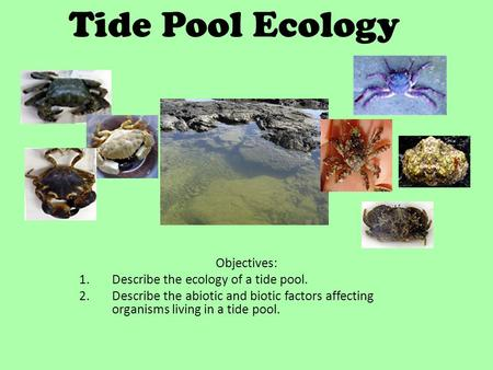 Tide Pool Ecology Objectives: Describe the ecology of a tide pool.