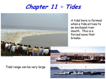 Chapter 11 – Tides A tidal bore is formed when a tide arrives to an enclosed river mouth. This is a forced wave that breaks. Tidal range can be very large.