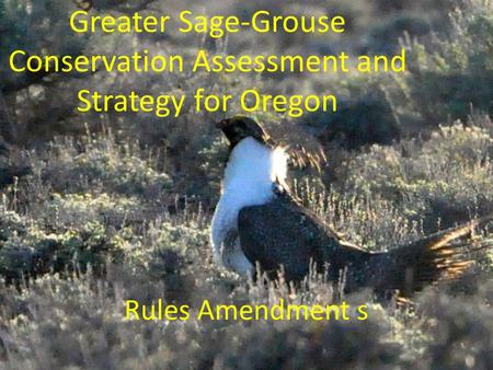 Greater Sage-Grouse Conservation Assessment and Strategy for Oregon Rules Amendment s.