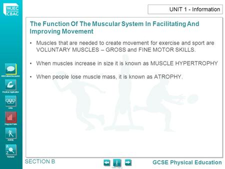 GCSE Physical Education Information/Discussion Practical Application Links Diagram/Table Activity Revision MAIN MENU The Function Of The Muscular System.