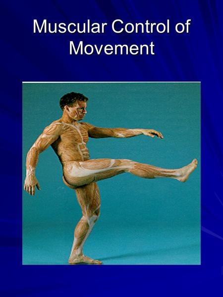 Muscular Control of Movement. Review of Anatomy Types of Muscles –Smooth: blood vessels and organs –Cardiac: heart –Skeletal: muscles for movement.