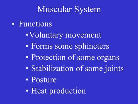 Muscular System Functions Voluntary movement Forms some sphincters Protection of some organs Stabilization of some joints Posture Heat production.