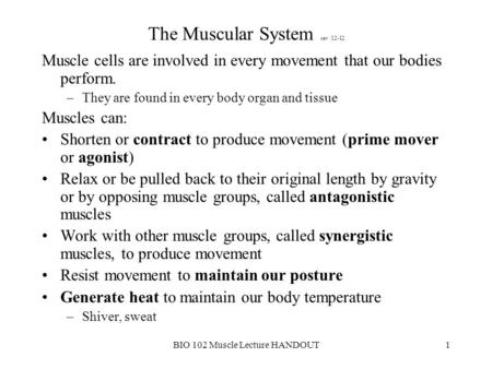 The Muscular System rev 12-12