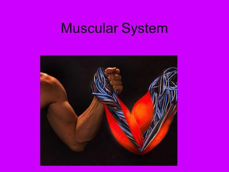 Muscular System. Vocabulary bi- two -ia condition of -lysis destruction, dissolve myo- muscle -plegia paralysis tri- three tendo- tendon para- lower half.