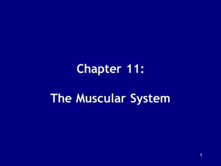 Chapter 11: The Muscular System
