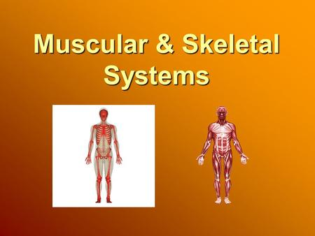 Muscular & Skeletal Systems. Muscular System Muscles are the motors that move body parts. Bones and joints have no power to move on their own. More than.