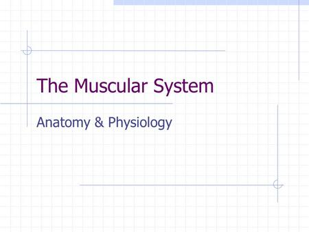 The Muscular System Anatomy & Physiology. Muscles: the machines of the body Skeletal Muscle Characteristics Voluntary: move due to a conscious decision.