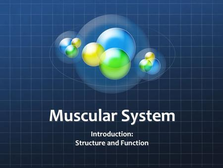 Muscular System Introduction: Structure and Function.