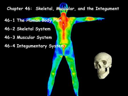 Body organization and the integumentary skeletal | Coursework ...