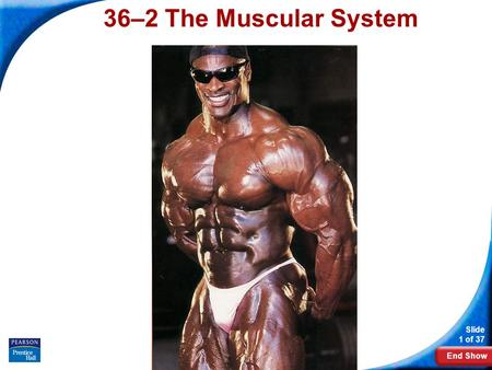 End Show Slide 1 of 37 Copyright Pearson Prentice Hall 36–2 The Muscular System.