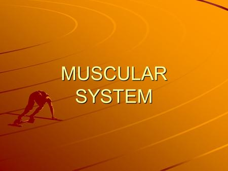 MUSCULAR SYSTEM. General Information Muscles account for 50% of body weight Protects organs –What organs? Gives body shape and posture Provides movement.