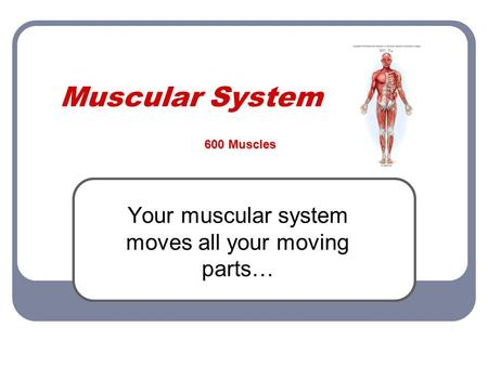 Muscular System Your muscular system moves all your moving parts… 600 Muscles.