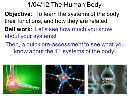 1/04/12 The Human Body Objective: To learn the systems of the body, their functions, and how they are related Bell work: Let's see how much you know.