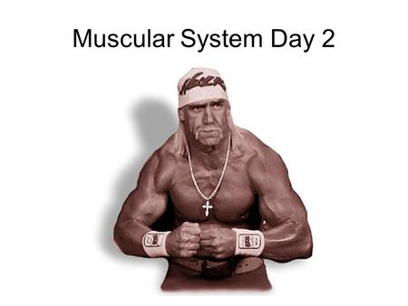 Muscular System Day 2. Muscle Development Hypertrophy – The growth and increase of the size of muscle cells Example? Bodybuilding.