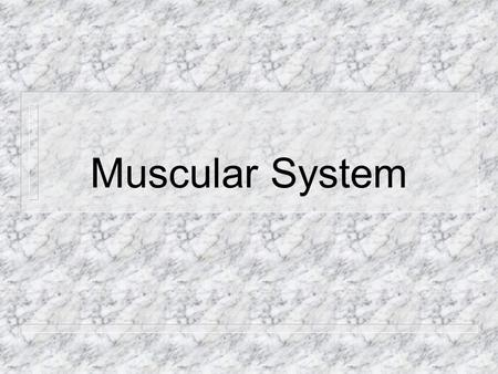 Muscular System My muscles are important because they… Hold my organs in place Hold my bones together so that I can move Help me chew my food Open and.