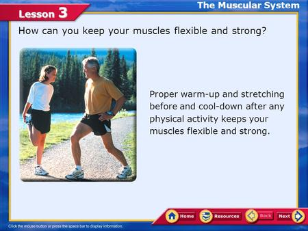 Lesson 3 How can you keep your muscles flexible and strong? The Muscular System Proper warm-up and stretching before and cool-down after any physical.