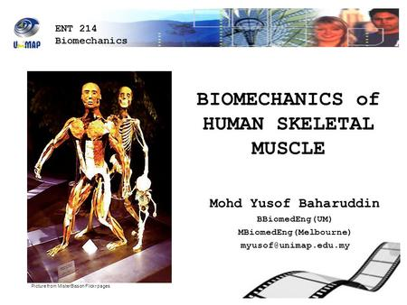 BIOMECHANICS of HUMAN SKELETAL MUSCLE