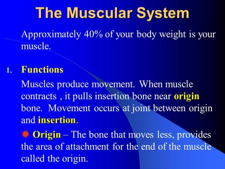 The Muscular System Approximately 40% of your body weight is your muscle. 1. Functions origin insertion Muscles produce movement. When muscle contracts,