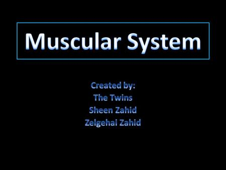 The Muscular System Structure Muscles have tissues that holds muscle cells together that provides elasticity. Muscle tissue also has many contractile.
