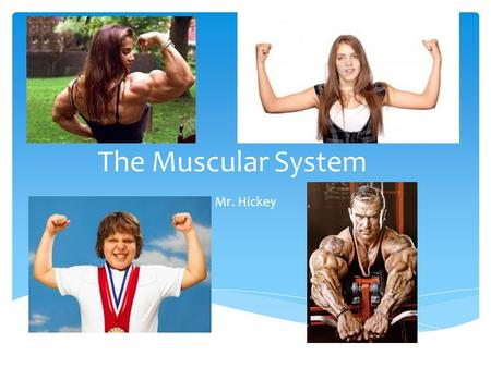 The Muscular System Mr. Hickey. Muscle Pretest.
