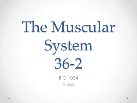 The Muscular System 36-2 BIO 1004 Flora. Types of Muscle Tissue 3 Different Types of muscle tissue: o Skeletal o Smooth o Cardiac o Each type of muscle.