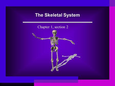 The Skeletal System Chapter 1, section 2. Bones The average adult has 206 bones. Give support Protect Move with muscles Store minerals and make blood.
