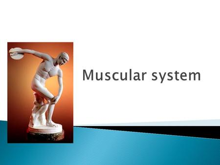 The function of the muscular system is to create movement, protect organs, aid digestion, and ensure blood flow.