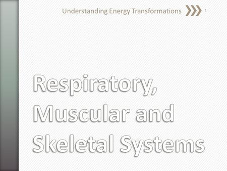 Understanding Energy Transformations 1. » What are groups of similar cells called? » What are the 4 basic types of tissue in animals? » Tissues 1.Epithelial.