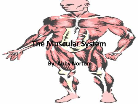 The Muscular System By: Abby Norton. Muscular System The human body contains anywhere from 640 to 850 individual muscles. There is no exact number of.