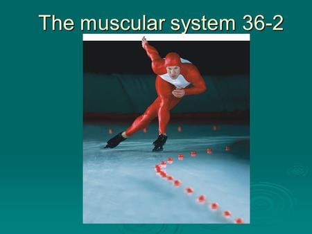 The muscular system 36-2. Muscles  Makes up 40% of the mass of an average person.  Power every movement of the body, from the blink of an eye to regulating.