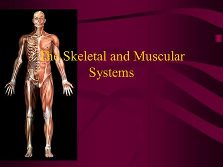 The Skeletal and Muscular Systems. The Skeletal System The bones of the body make up the skeletal system (206 bones in adults) FUNCTION: Bones provide.