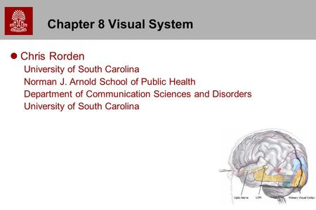 1 Chapter 8 Visual System Chris Rorden University of South Carolina Norman J. Arnold School of Public Health Department of Communication Sciences and Disorders.