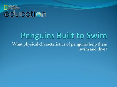 What physical characteristics of penguins help them swim and dive?