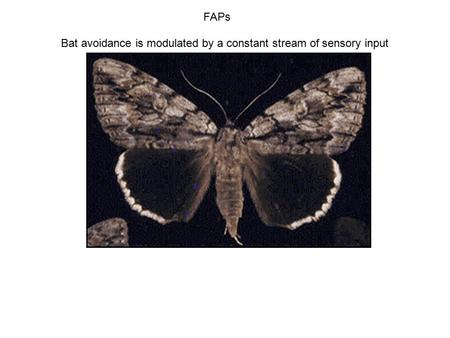 FAPs Bat avoidance is modulated by a constant stream of sensory input.