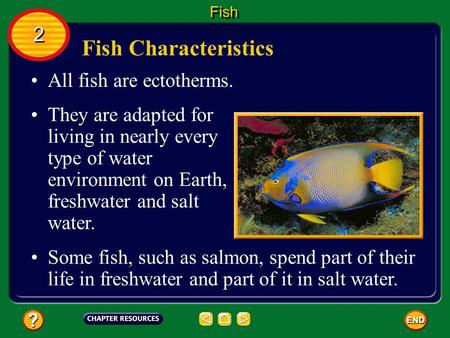 Fish Characteristics All fish are ectotherms. They are adapted for living in nearly every type of water environment on Earth, freshwater and salt water.