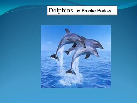 Dolphins by Brooke Barlow. Individual research A Dolphin is a mammal it can leap 10 to 20 feet in the air. There are many types of Dolphins.a Dolphins.
