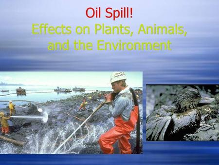 Oil Spill! Effects on Plants, Animals, and the Environment.